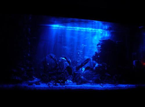 Ночное освещение аквариума светодиодами