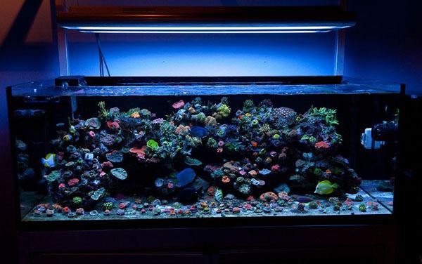 Как сделать подсветку аквариум